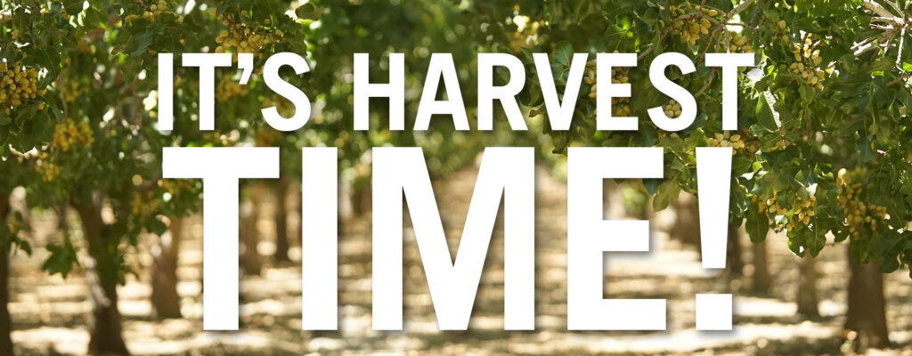 its harvest time